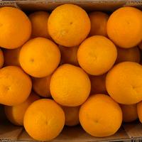 Orange Douce Vanille