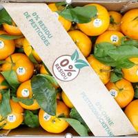 Orange Feuille Tarocco