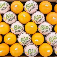 Orange Bio Navel Powel