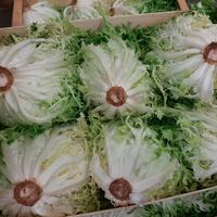Salade frisée XL grosses catégorie 1, colis de 8 pièces