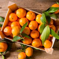 Mandarine Pitufo Orri
