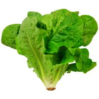 Salade - Romaine - FRA - Rais