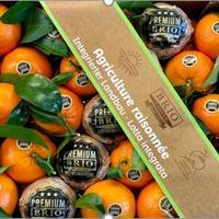Mandarine Feuille Orri-Agr.Rais.