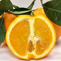 Orange Newhall Santi
