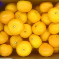 Mandarine Orri Fama 1/100 Cat I