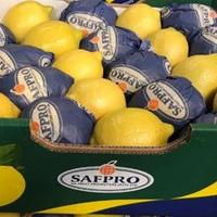 Citron  Eureka Safpro Cal. 3/75