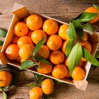 Mandarine Clemenvilla