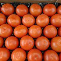 Tomate côtelée ronde catégorie 1, calibre 47/57, toutes origines, colis de 6 kg