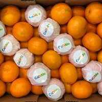 Mandarine Orri Cadime Cal. 1