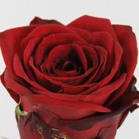 Rose gb Red Naomi 55cm, carton de 10 bottes