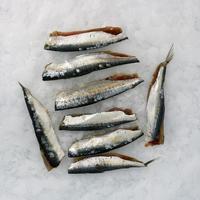 Filet Sardine Ane