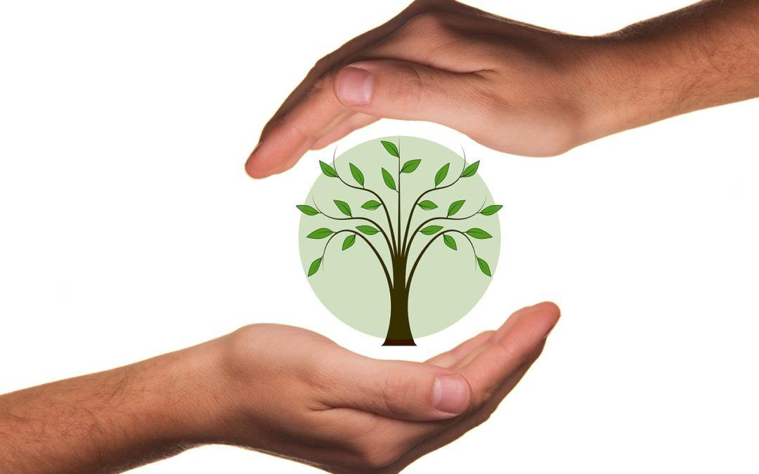 Eco design : Comment l'éco-design a gagné sa place dans le monde industriel