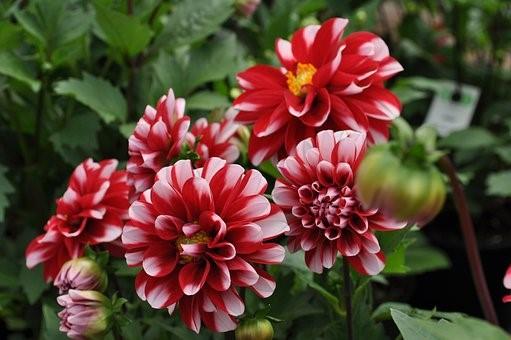 3 meilleurs conseils pour les débutants pour planter des bulbes à fleurs