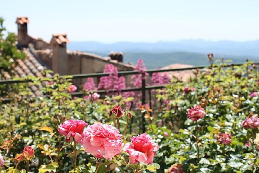 Le duo de fleurs à croissance facile pour orner votre balcon