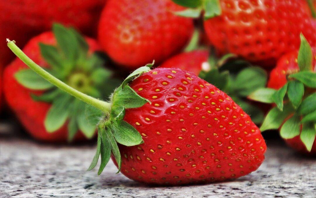 Tout ce que vous devez savoir sur la culture des fraises