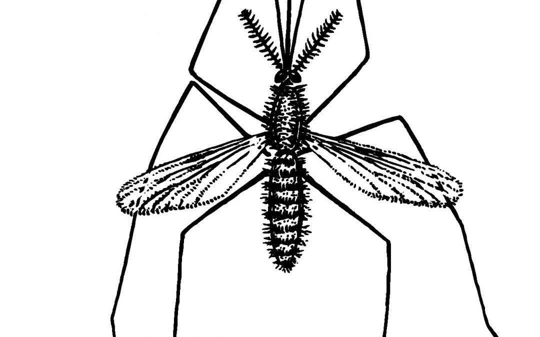 Comment fabriquer un répulsif naturel contre les moustiques