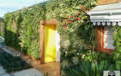 Les 3 bienfaits d'un mur végétal