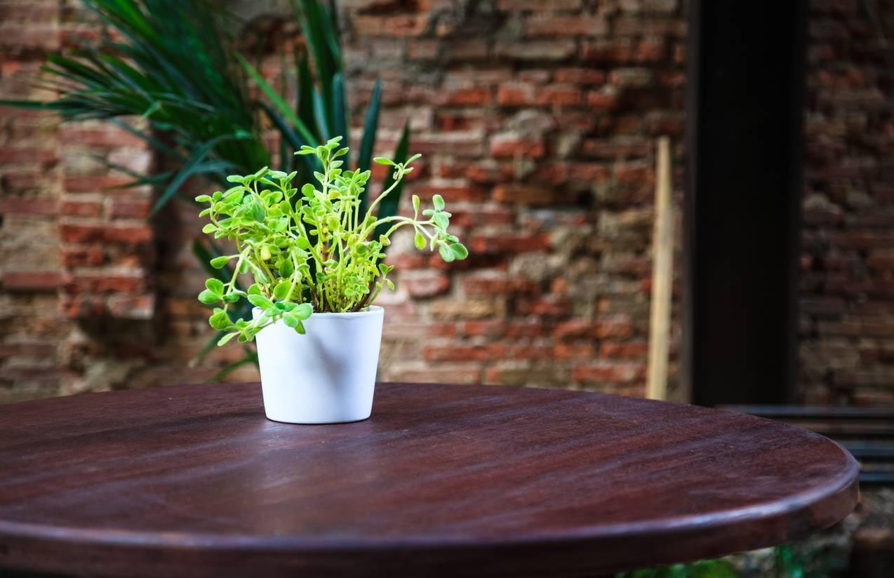 plante décorative pour agrémenter votre déco