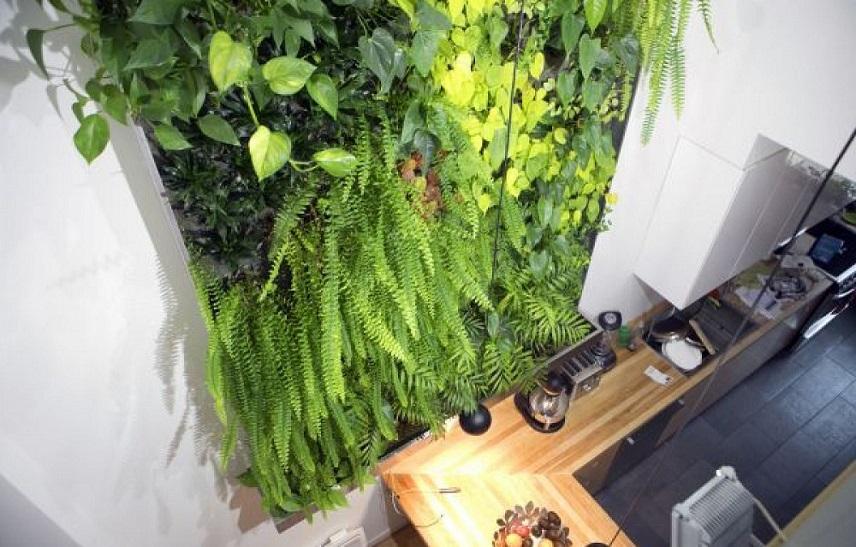 mur végétal intérieur maison