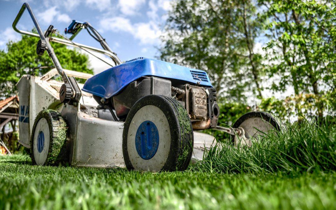 Sept conseils pour obtenir une pelouse biologique plus verte   Young House Love