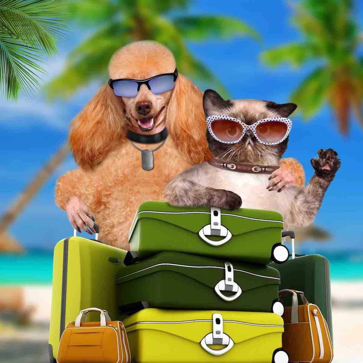 Été et vacances : préparer vos conseils !