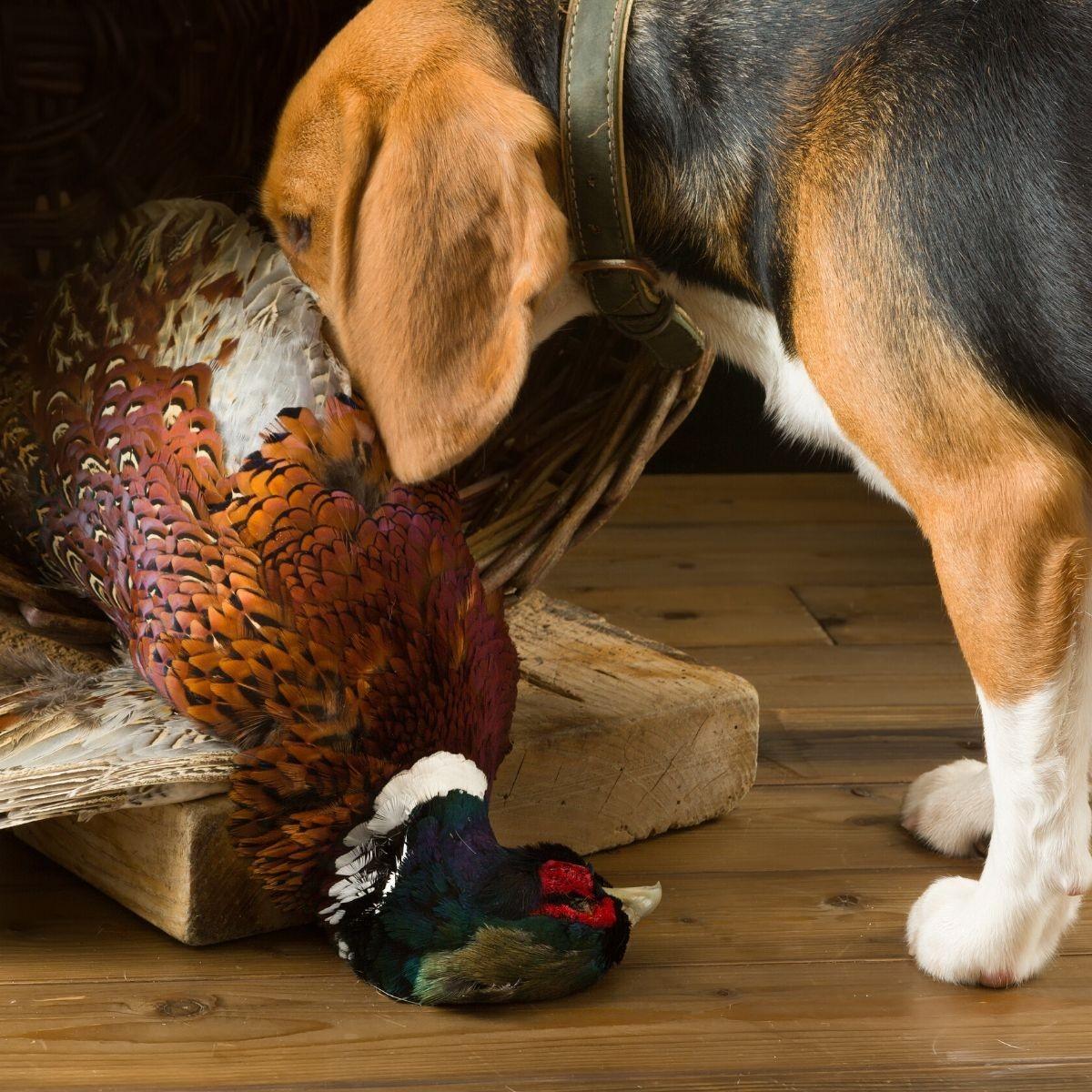 Préparation à la chasse  : satisfaire et fidéliser les chasseurs!