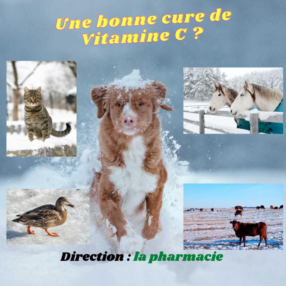 Vitamine C : conseillez une bonne cure pour l'hiver
