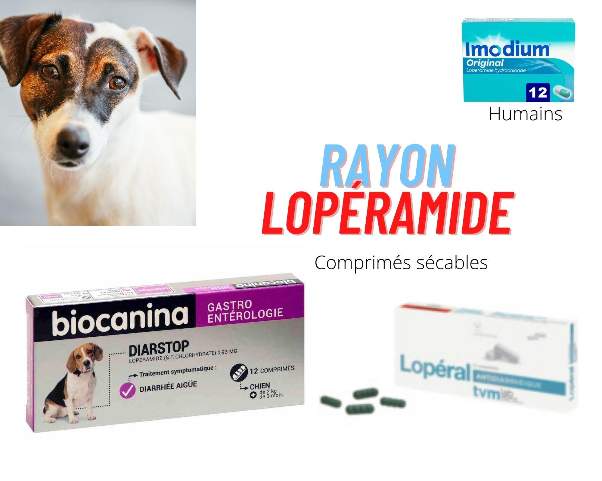 Lopéramide : conseil pratique pour le chien