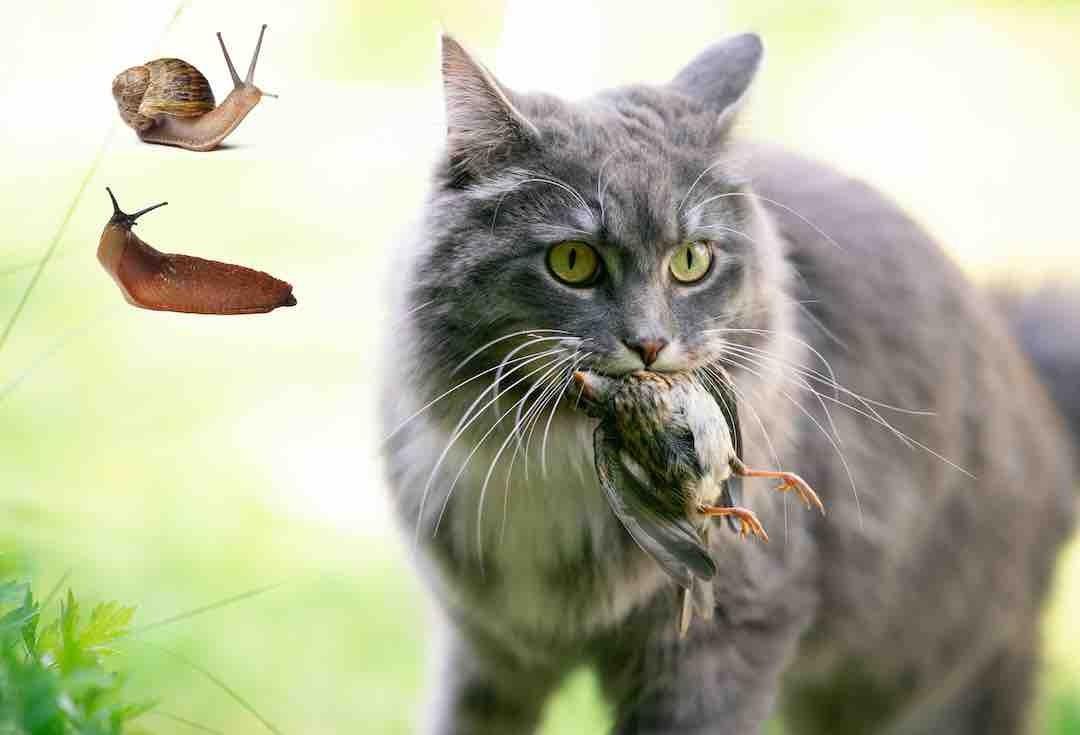 Ver du poumon chez le chat