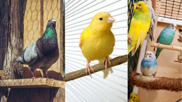 Parasites externes des oiseaux : prévention et traitement
