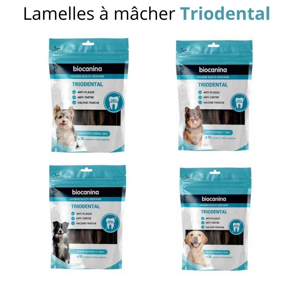 Triodental