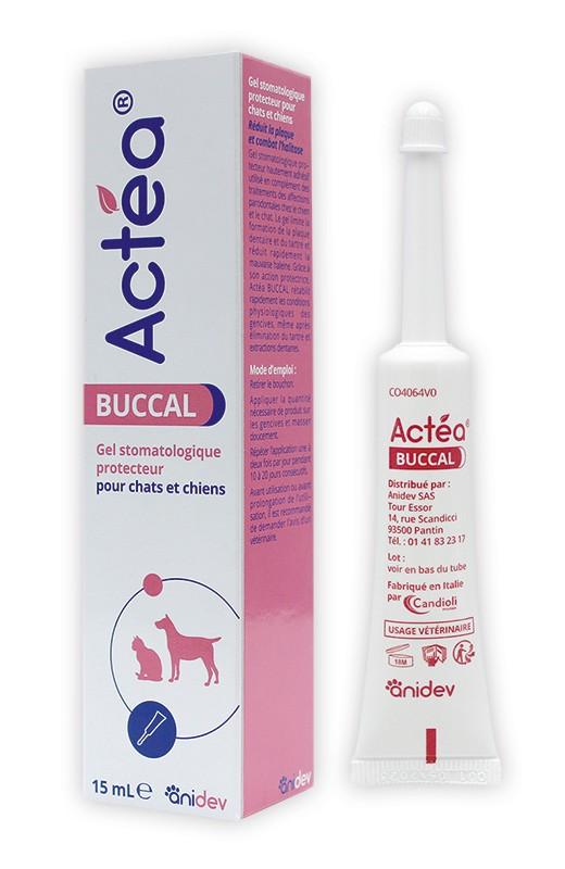 Actea Buccal