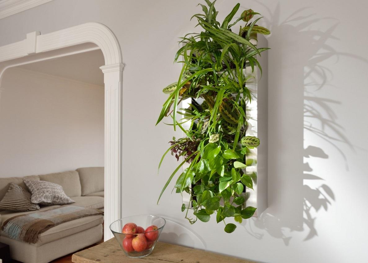 plante végétal