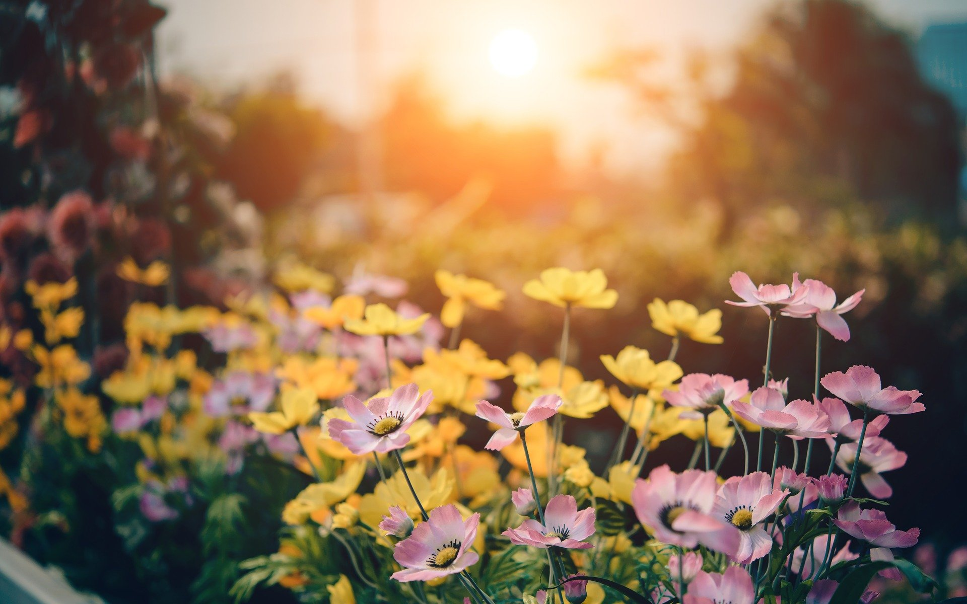 14_projets_de_bricolage_pour_faire_pousser_votre_jardin