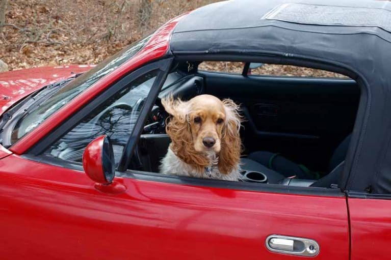 meilleur housse de siege pour chien pour auto